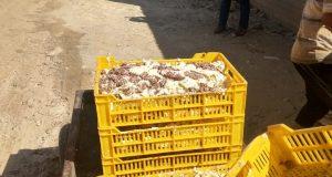 ضبط ٤ طن أغذية فاسدة بمصنع حلويات بالشرقية